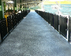 Speckle coated non slip surface